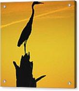 Heron Silhouette Acrylic Print