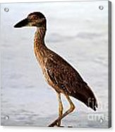 Heron Under The Dock Acrylic Print