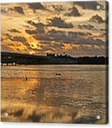 Herons And Egrets And Porpoise Oh My Acrylic Print