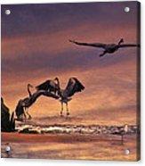 Herons At Sunset Acrylic Print