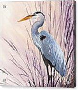 Herons Driftwood Home Acrylic Print