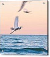 Herons Flying Over The Sea  Acrylic Print