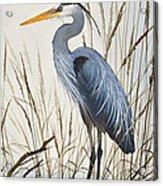 Herons Natural World Acrylic Print
