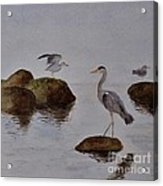 Herons On Water Acrylic Print
