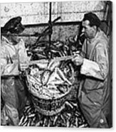 Herring Fishing Howth 1955  Acrylic Print