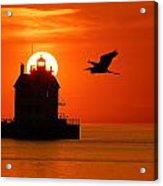 Herron At Sunset Acrylic Print