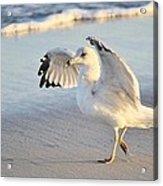 Hey Wait - Sea Gull Acrylic Print