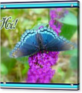 Hi Hello Greeting Card - Red Spotted Purple Butterfly Acrylic Print