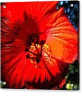 Hibiscus 2 Acrylic Print by Mark Malitz