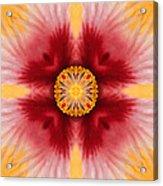 Hibiscus Close-up--kaleidoscope Acrylic Print