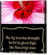 Hibiscus Closeup With Bible Quote From Song Of Songs Acrylic Print