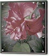 Hibiscus Dream Acrylic Print