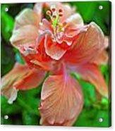 Hibiscus IIi Acrylic Print