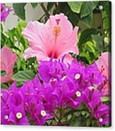 Hibiscus In Spring Acrylic Print by Diane Mitchell