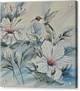 Hibiscus in Spring Acrylic Print