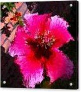 Hibiscus In The Sun Acrylic Print