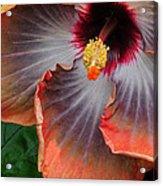 Hibiscus Key Largo Acrylic Print