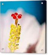 Hibiscus No. 2959 Acrylic Print