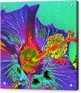Hibiscus Power Acrylic Print by Rebecca Flaig