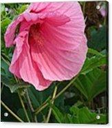 Hibiscus Profile Acrylic Print