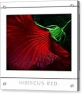 Hibiscus Red Poster Acrylic Print