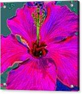 Hibiscus Skies Acrylic Print by Rebecca Flaig