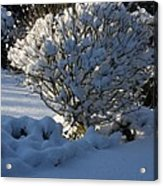 Hibiskus In The Wintertime Acrylic Print