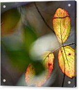Hidden Forest Leaves Acrylic Print
