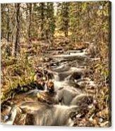 Hidden Forest Treasure Acrylic Print