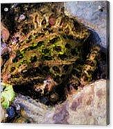 Hidden In The Rocks Acrylic Print
