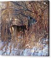 Hidden In The Trees Acrylic Print