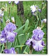Hidden Iris Acrylic Print