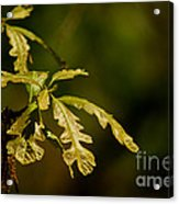 Hidden Leaves With A Green Back Ground Acrylic Print by Robert D  Brozek
