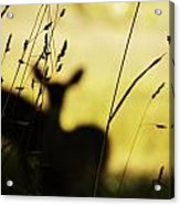 Hidden Life Surrounds Acrylic Print by Christian Rooney