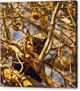 Hidden Owl Acrylic Print