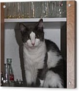 Hiding In The Cabinet Acrylic Print