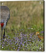 Hiding In The Flowers Acrylic Print