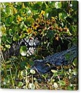Hiding In The Marsh Acrylic Print