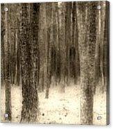 Hiding In The Trees By Diana Sainz Acrylic Print