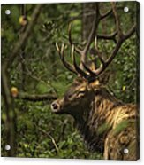 Hiding In The Woods Acrylic Print