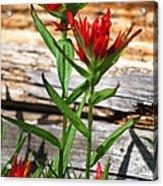 High Country Wildflowers Acrylic Print