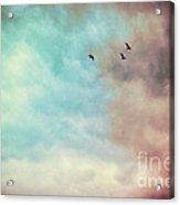 High In The Sky Acrylic Print