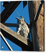 High Up Acrylic Print by Scott Ware