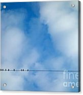 High Wire Act Acrylic Print