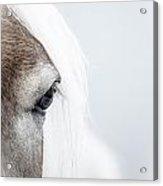 Highkey Horse Eye Acrylic Print