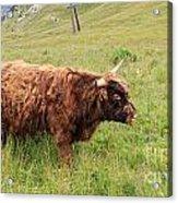 Highland Caw Acrylic Print