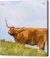 Highland Cow Watercolour Acrylic Print