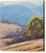 Highland Grazing Lithgow Acrylic Print