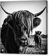 Highlander 1 Acrylic Print