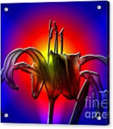 Highlight Of The Day Acrylic Print